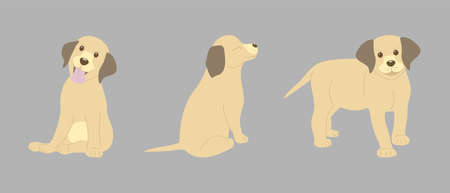 three labrador puppies on a gray background in different poses. the puppy stands, sits with his tongue out and sits with his eyes closed Ilustracja
