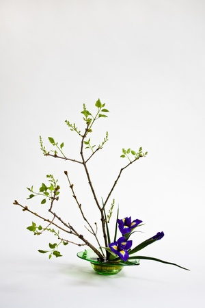 Ikebana with irises and lilac on the light background photo