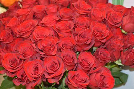Red roses Stock fotó