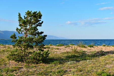 Lonely tree and mountain landscape. Magic Lake Baikal. Picturesque amazing nature landscape of Siberia.