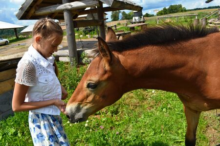 Beautiful girl in dress feeds foal. Teenager with fair hair and little horse. Foto de archivo - 130774724