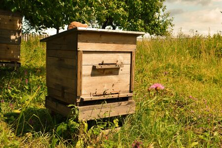 Wooden beehive. House for bees on field in summer. Bee-keeper brings bees for collecting of natural honey. Фото со стока