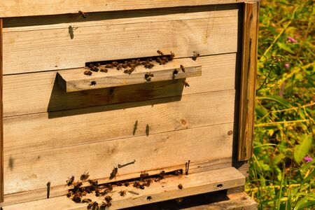 Wooden beehive. House for bees on field in summer. Bee-keeper brings bees for collecting of natural honey Фото со стока - 130774874