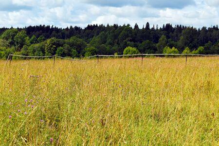 Rural summer natural landscape