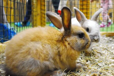 Contact zoo for children. Breeding rabbits.