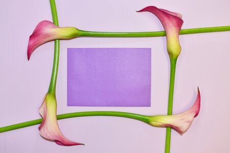 Romantic callas on a pink background. Designer wallpaper with delicate callas.