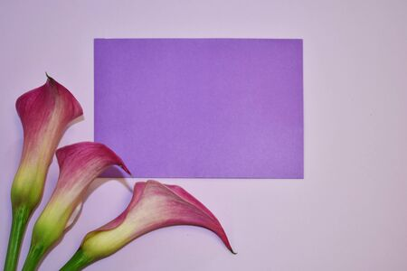 Beautiful light plain texture with vibrant colors. Pastel card with floral decor. March 8