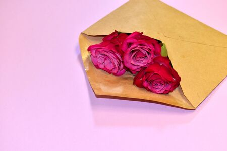 Flower in an envelope on a pink background. Beautiful floral gift in a letter. Stockfoto