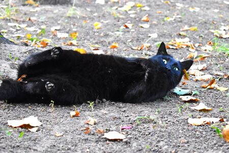 The problem of abandoned street cats.