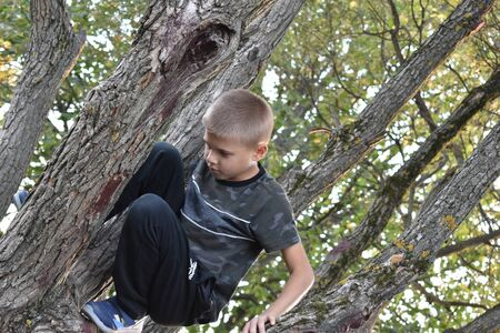 A boy climbs trees. Weekend with children in nature. Stockfoto - 132306360