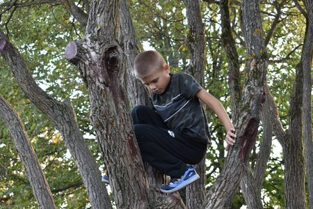 A boy climbs trees. Weekend with children in nature. Stockfoto