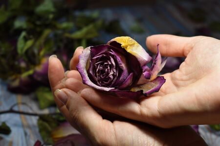 Dead flowers lie in the palm of your hand. Hand skin care. Dry decorative purple flowers in the hands.