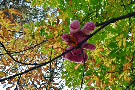 Toy hanging on a tree in the garden.  A teddy bear is hanging on tree branches. Zdjęcie Seryjne
