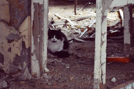 A homeless cat lives in ruins. Old wooden house inside with lonely cat. Hungry sad cat is hiding in collapsed house inside.