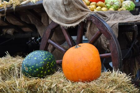 Autumn harvest of pumpkins. Natural vegetable autumn decor in the city.