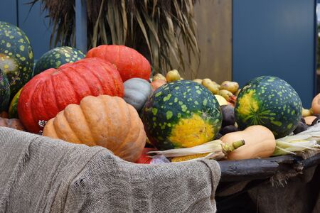Different vegetables in the scenery of the store. Autumn harvest of vegetables.