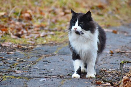 Homeless cat is looking for food. Problem of abandoned pets. Stock Photo