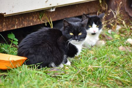 The problem of protecting street animals. Two little kittens outdoors in summer.