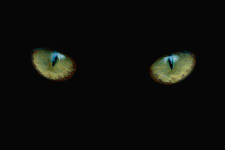 Two eyes of a cat are looking straight. Close-up. Stock Photo