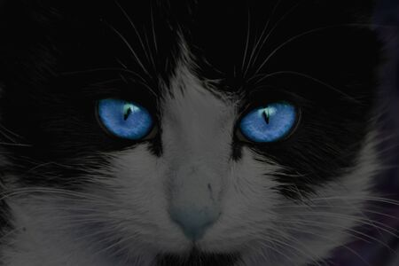 Mystical cat with big blue eyes. Stock Photo
