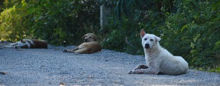 The problem of homeless animals. Trapping dogs.