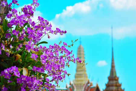 Purple flowers in Bangkok. beautiful Asia