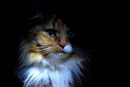 Feline look. Cute pet cat night Stockfoto