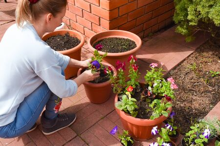 Bitter garden plants. Woman to grow beautiful flowers in the garden