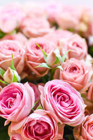 Pink fresh roses background, delicate beautiful flowers buds texture Standard-Bild