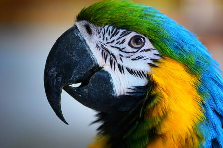 Colorful Ara parrot portrait Foto de archivo