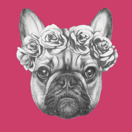 french style: Hand drawn portrait of French Bulldog with roses. Vectorial isolated elements.