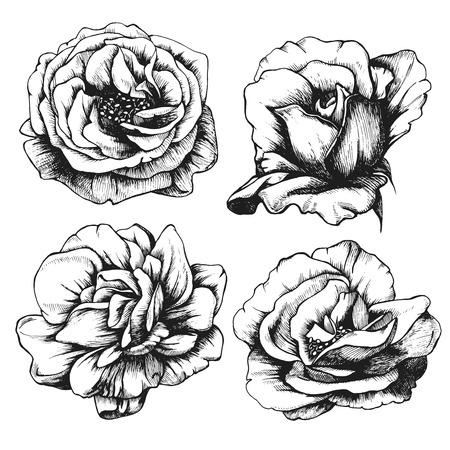 Set van zeer gedetailleerde hand getrokken rozen. Stock Illustratie