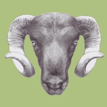 Hand drawn ram's head. Vector