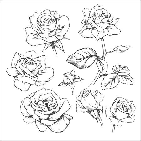 手描きバラのセットです。