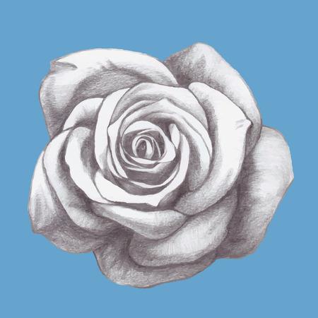 rose: Hand drawn rose. Vector