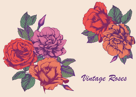 highly detailed: Highly detailed hand-drawn roses. Vectorial isolated elements. Illustration