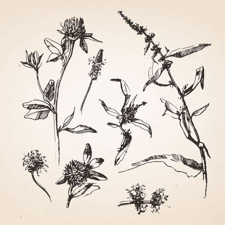 Hand-drawn sketches of plants. Vector elements. Ilustracja