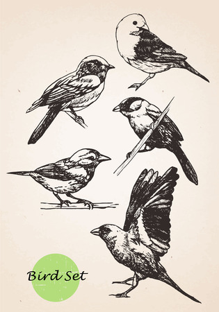 Set of highly detailed hand-drawn birds.Vector isolated elements.