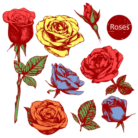 highly detailed: Set of highly detailed colorful hand-drawn roses.