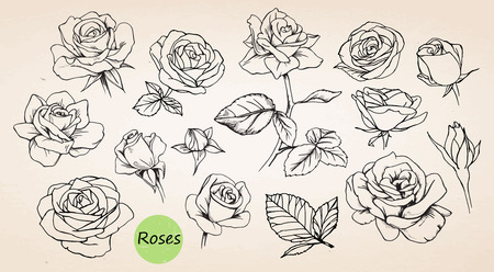 Set of hand drawn roses. Vector Vettoriali