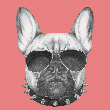 Hand drawn portrait of French Bulldog with collar and sunglasses . Vector isolated elements.