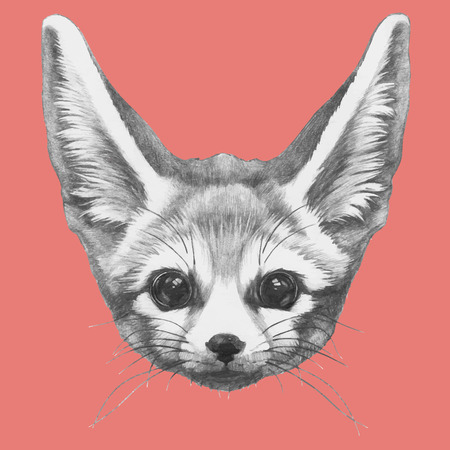 Hand drawn portrait of Fennec Fox. Vector isolated elements.