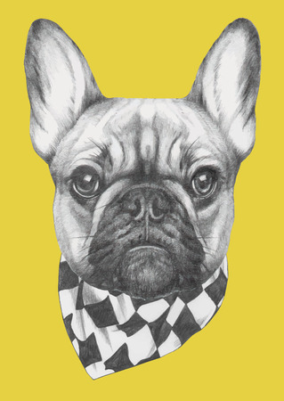 Hand drawn portrait of French Bulldog  with scarf. Vector isolated elements. Illustration