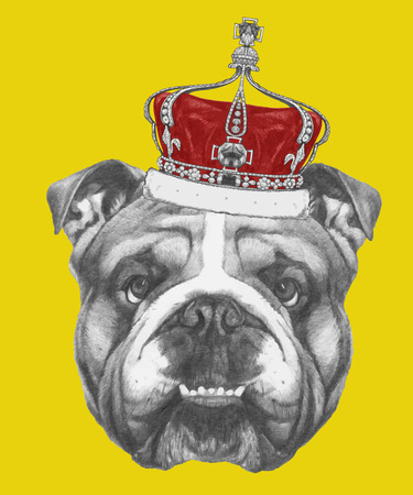 Hand drawn portrait of English Bulldog with crown. Vector isolated elements.