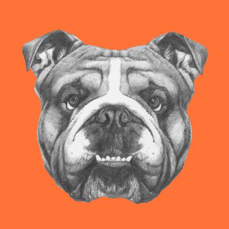 dibujado a mano retrato de Bulldog Inglés. Vector.