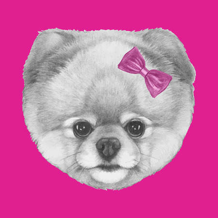 Original drawing of Pomeranian with pink bow. Isolated on colored background. Ilustração