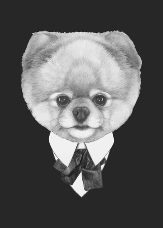 Hand drawn fashion Illustration of Pomeranian dog. Vector isolated elements. Ilustração