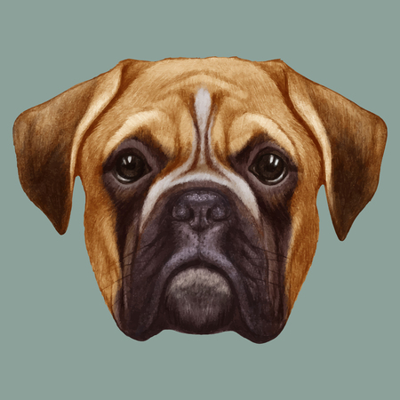 Portrait of Boxer dog. Isolated on white background. Vector