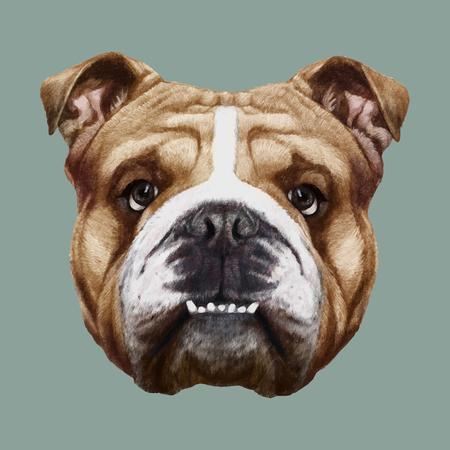old english: Portrait of English Bulldog. Hand-drawn illustration, digitally colored. Vector