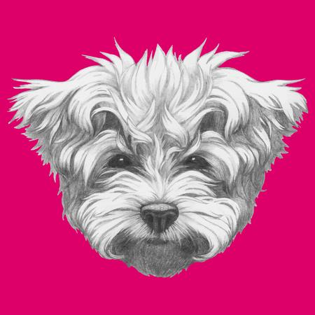 maltese: Hand drawn portrait of Maltese Poodle. Vector. Illustration